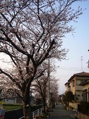 2008 03 29 002_1.jpg