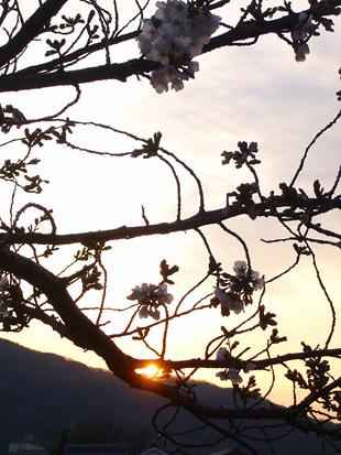 2008 03 29 005_11.jpg