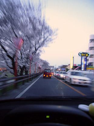 2008 03 29 017_1.jpg